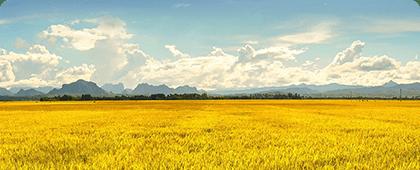 智慧企业可视化解决方案-智慧农业可视化解决方案